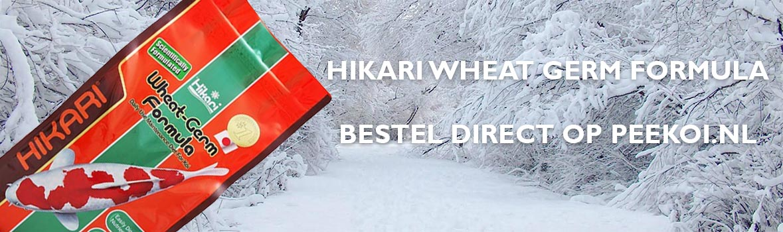 Hikari Wintervoer | Hikari Wheat Germ Formula | Bestel Online