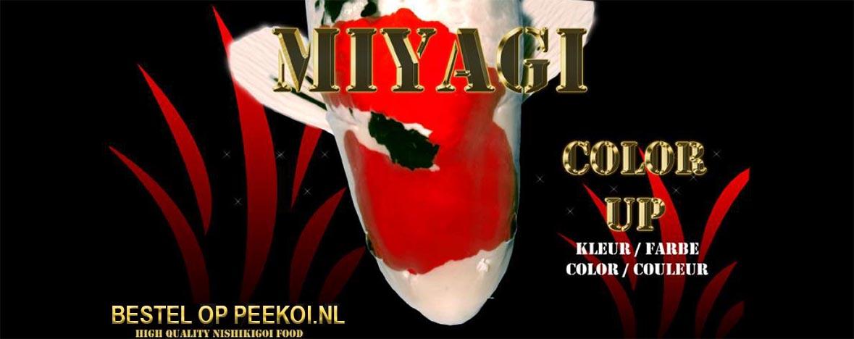 Miyagi Color Up bestellen